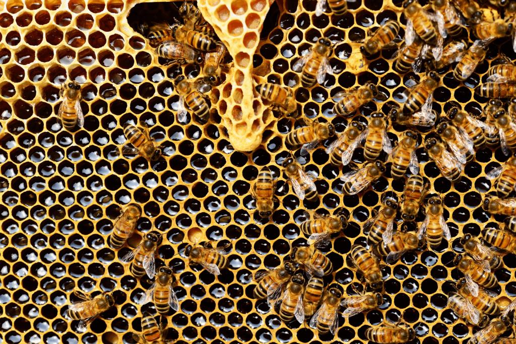 5. vrbovečki dani meda